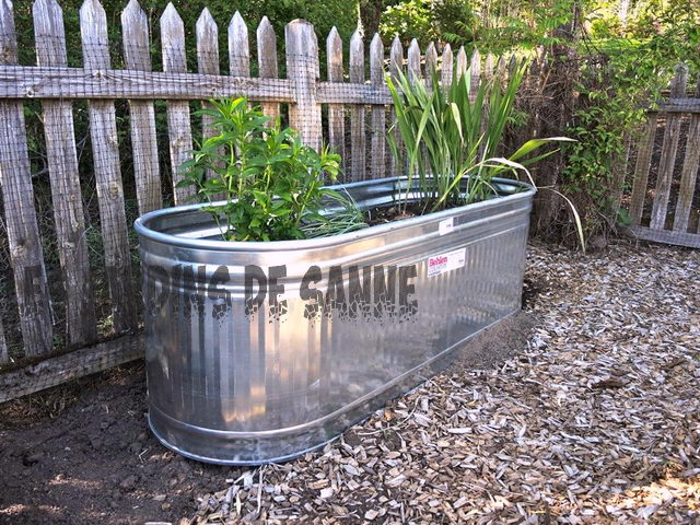 Metal Plant Containers: Vokser Planter I Galvaniserte Containere